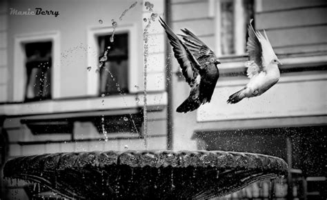 stunning black  white photographs creativeoverflow
