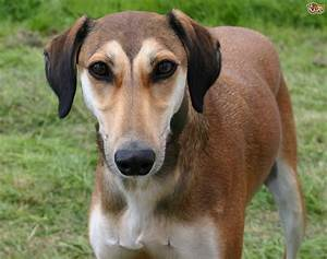 hot or not what dog breeds and types are changing in popularity in the uk