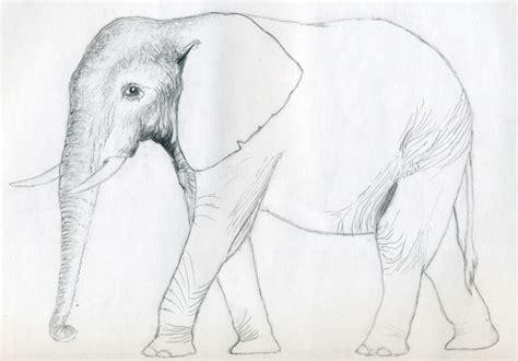 draw  elephant
