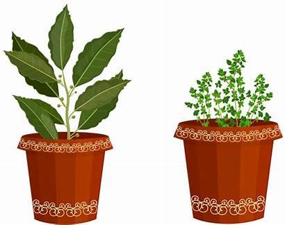 Clipart Potted Plant Spices Transparent Clip Garden
