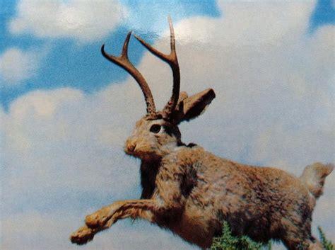 Jackalope Yellowstone Trip Pinterest