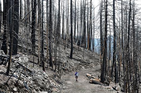 southwests forests   recover  megafires