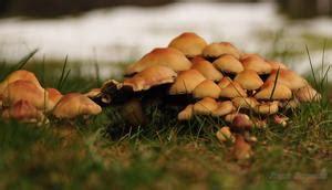 Seltsame Pilze Im Garten by Pilze Im Garten 17 News B 252 Rgerreportern Zum Thema