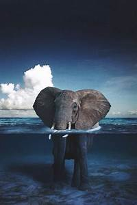 Elephants Wallpaper Tumblr | www.imgkid.com - The Image ...