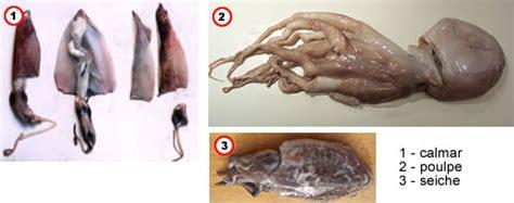 cuisiner la seiche comment préparer poulpes calmars et seiches
