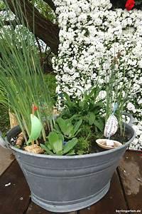 Miniteich Anlegen Zinkwanne : mini teich bepflanzen attraktiv f r balkon terrasse kleine g rten ~ A.2002-acura-tl-radio.info Haus und Dekorationen