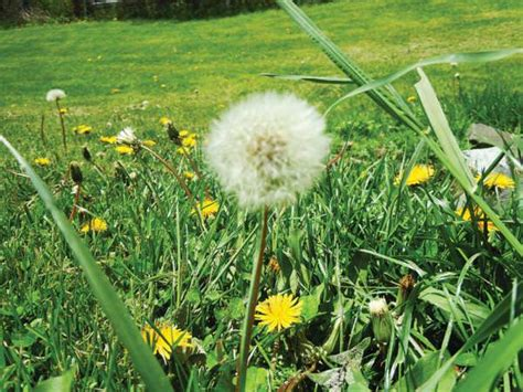 Fall Lawn Tricks For A Killer Lawn In Spring!