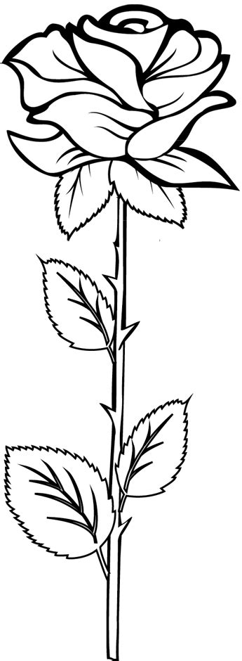 Une rose | Rose coloring pages, Flower drawing, Roses drawing
