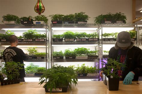 marijuana dispensaries  facing  scrutiny