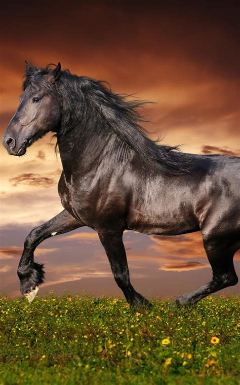 horses horse wallpapers google android imagenes screen apps friese different