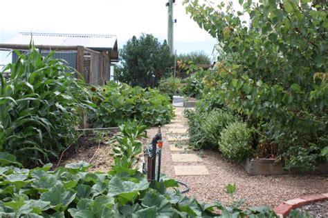 vegetable garden design australia vegetable gardens by yummy gardens