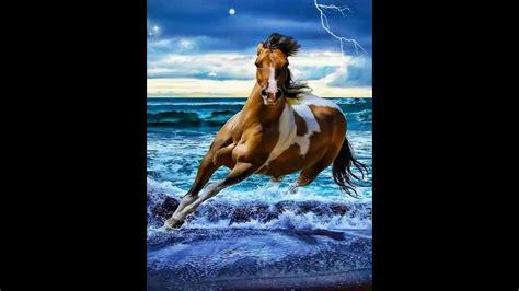 energetic horses