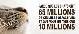 Litiere Chat Sans Odeur : litiere pour chats agglom rante biologique sans odeur ~ Premium-room.com Idées de Décoration