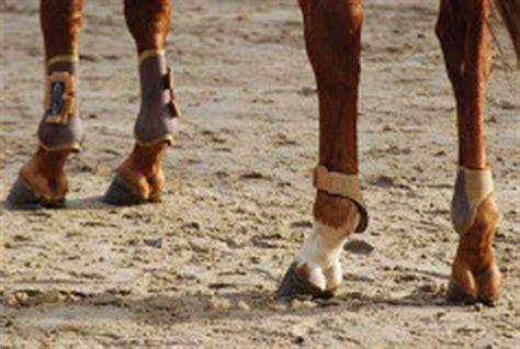 spat beim pferd die haeufig auftretende gelenkkrankheit
