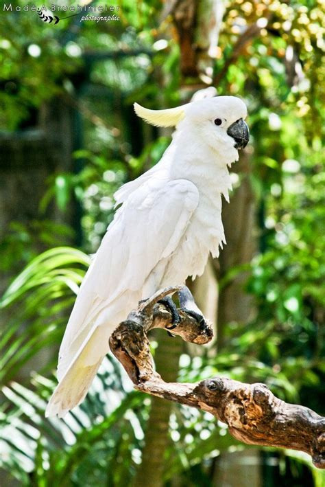 images  cockatoos  pinterest  birthday