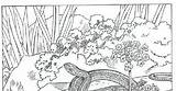 Coloring Garters Snake Garter Template sketch template