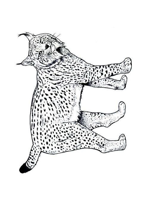 la cuisine de bébé coloriage lynx coloriage sur hugolescargot com