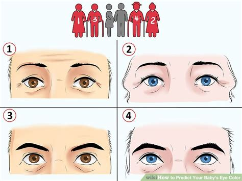 eye color calculator with grandparents eye color calculator with grandparents world of