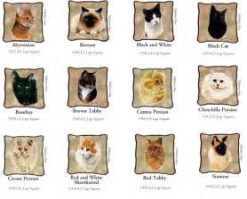 common cat breeds that s cats and dogs