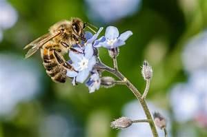 Blumen Und Ihre Bedeutung : blaue blumen und ihre bedeutung blog floraqueen deutschland ~ Frokenaadalensverden.com Haus und Dekorationen