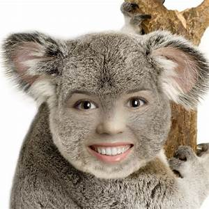 'Koala' Animal Face in Hole Photo Montage Online