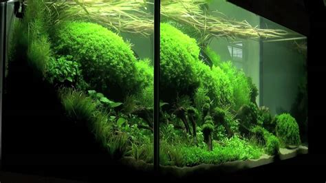 Planted Aquascape by Aquascaping Aquarium Ideas From The Of The Planted