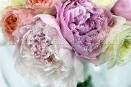 English Peonies and Roses