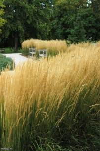 Karl Foerster Feather Reed Grass