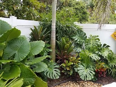 Tropical Plants Landscapes Palm Landscape Beach Different
