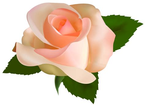 Rose Flower Hd Png
