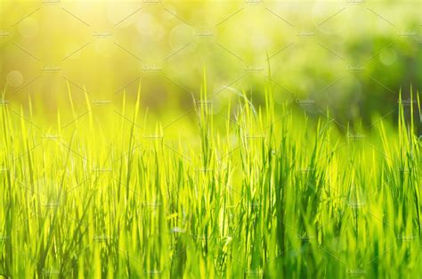 green grass field background nature  creative market