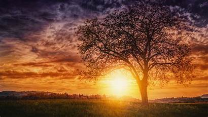 Sunset Nature Trees Resolution Wallpapers Background 4k