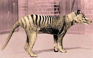 10 Most Amazing Extinct Animals | The Ashes