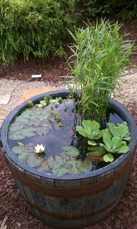 water garden plants amazing ideas of how to make mini ponds in pots