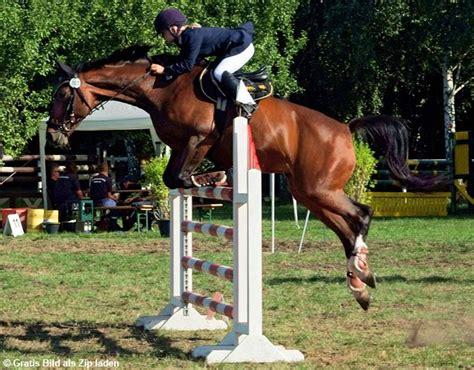 der sprung im pferdeparcours  photoshop