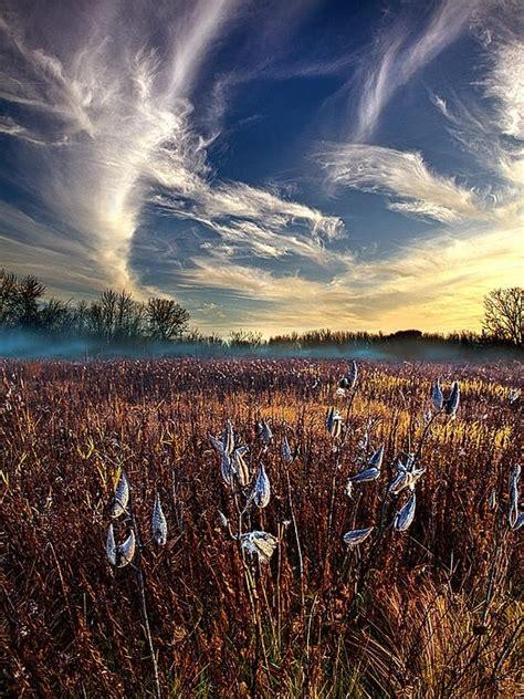 Milkweed Wisconsin