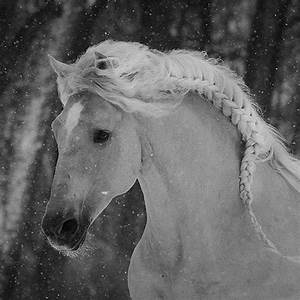 Black And White Horse Photography Pictures to Pin on ...