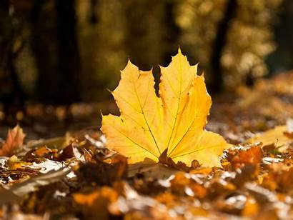 Fall Wallpapers Leaves Falling Autumn Leaf 1080p