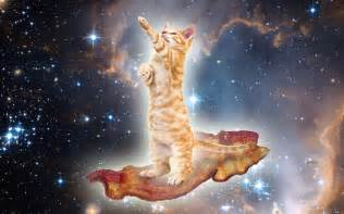space cats cats in space you come from there right meow