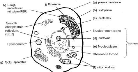 poonchengmoh amali poses sains biology pg