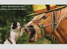 Rambos HomePage Lustige Tierbilder
