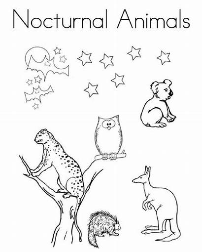 Nocturnal Coloring Animal Animals Printable Animaux Diurnal