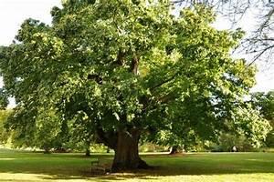 Quel Arbre Planter Près D Une Maison : planter un arbre efficacement ~ Dode.kayakingforconservation.com Idées de Décoration