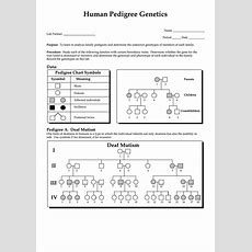 Human Pedigree Genetics  Biology Worksheet Printable Pdf Download