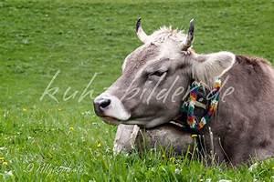 Kuh Bilder Auf Leinwand : kuhbild im detail die miggelige kuh kuhbilder als ~ Whattoseeinmadrid.com Haus und Dekorationen
