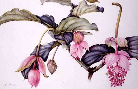 Bbc News  In Pictures  In Pictures Botanical Art