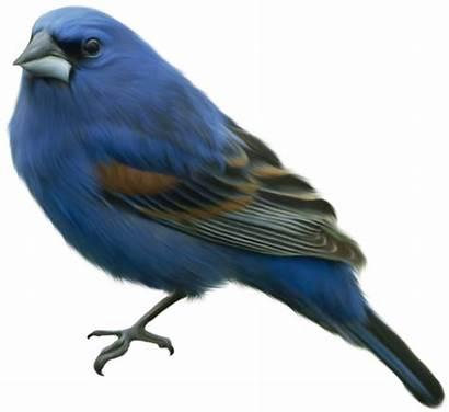 Burung Bulu Rambut Gambar Bukan Lukisan Lenga