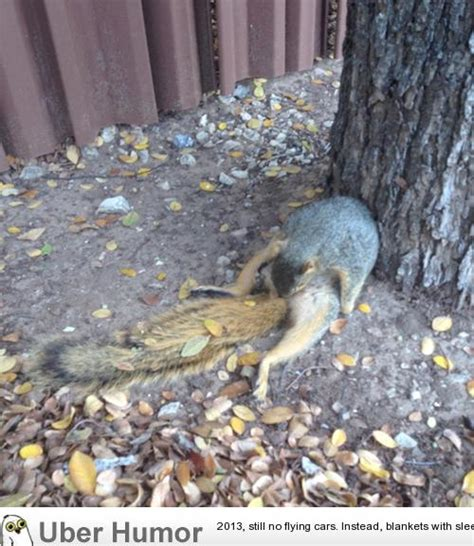 Just Squirrel Trying Bust Nut Guys Nothing New
