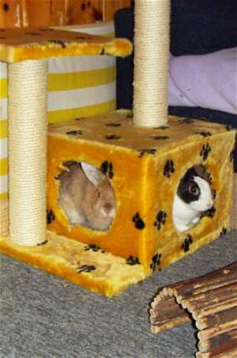 kaninchen info gehegeeinrichtung