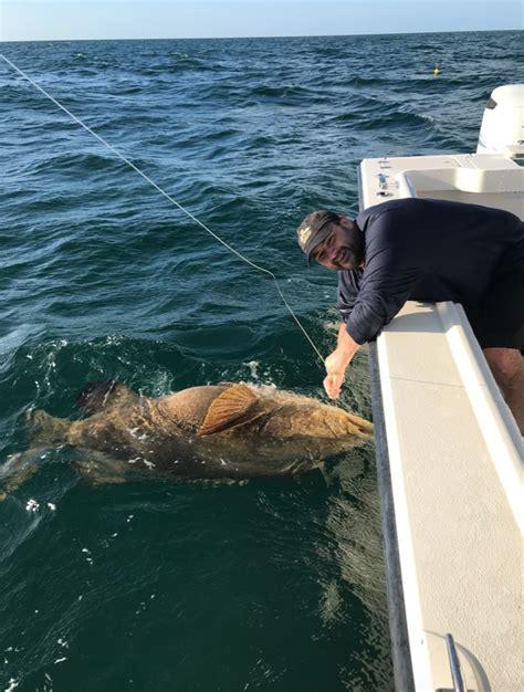grouper goliath jan comments